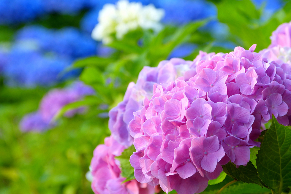 01-blog-ogata2015061001