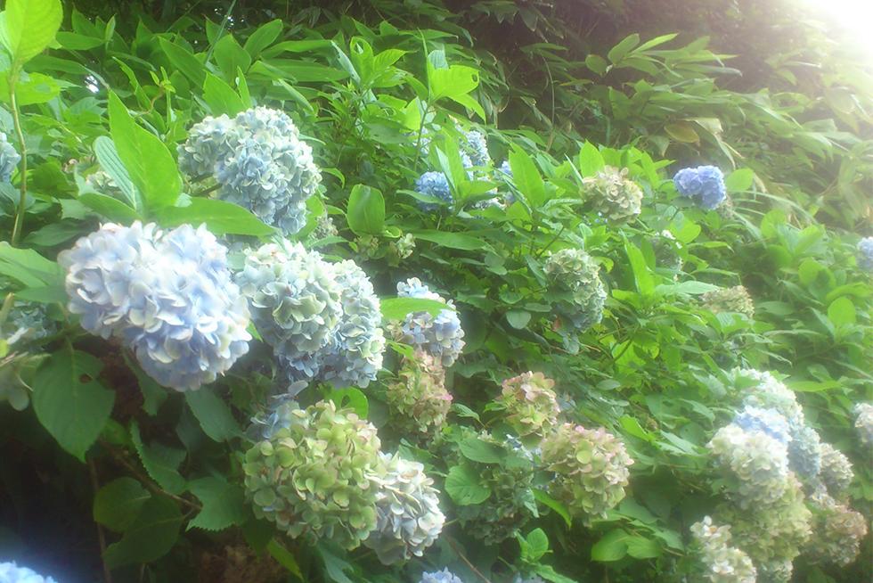 02-blog-nakamura2015071701
