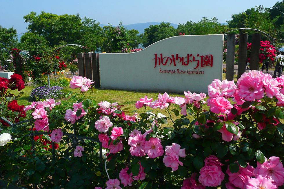 02-blog-yamaguchi2015101502