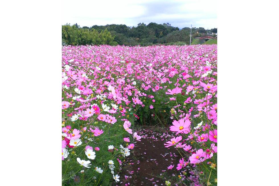02-blog-futagawa2015110901