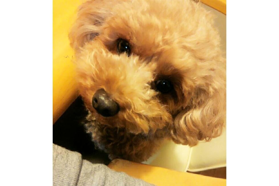 03-blog-nakanishi2015112101