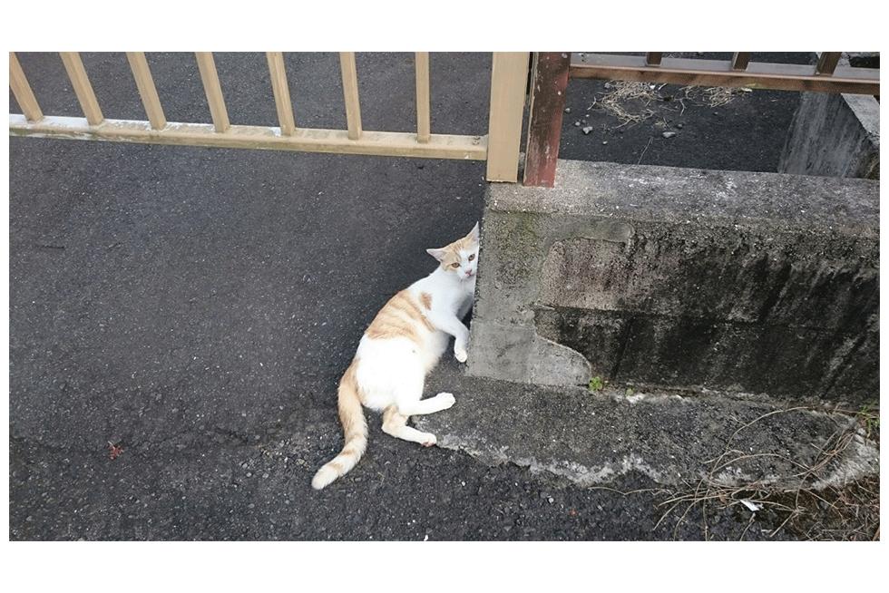 03-blog-uchino2016061001