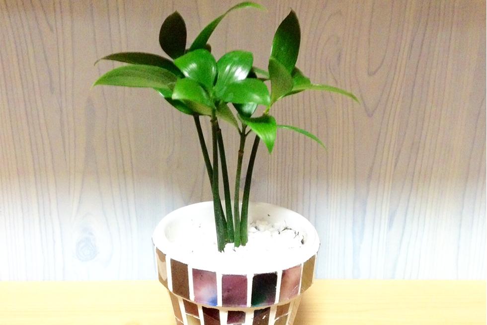 02-blog-sakamoto2016070602