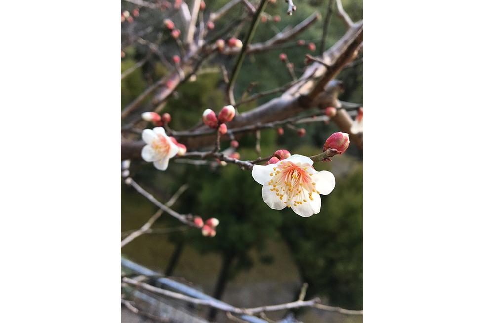 02-blog-maeda2017020201